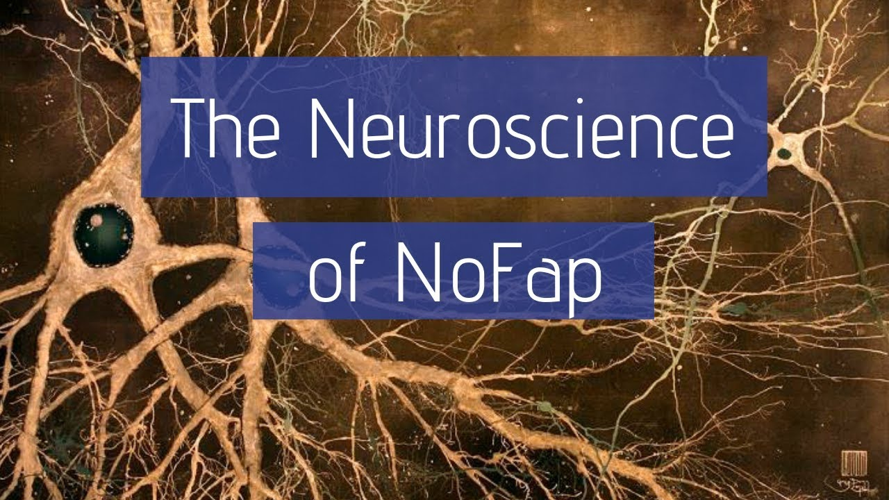 the neuroscience of nofap why pornography changes the