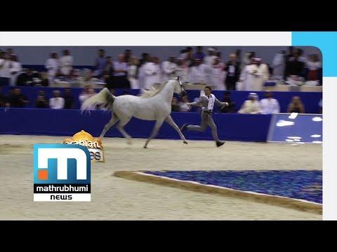 Dubai International Horse Fair A Huge Draw| Arabian Stories, Episode: 167| Mathrubhumi News