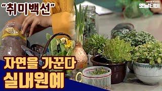 실내원예 - 자연을 가꾼다 | 취미백선 19920425…