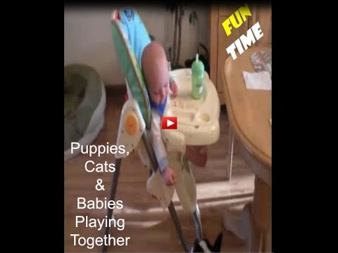 Puppies, Cats and Babies Playing Together Completion 2017