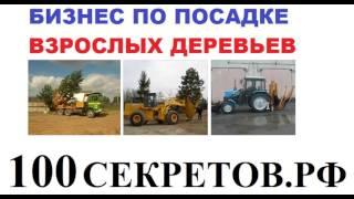 Бизнес по пересадке взрослых деревьев Оборудование и оценка прибыли(, 2016-01-09T18:42:29.000Z)