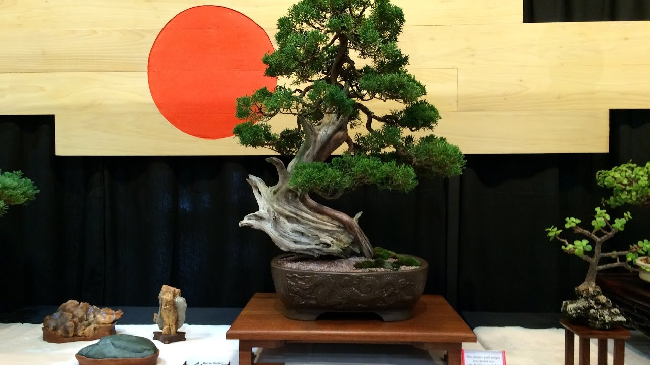 Carolina Bonsai Expo 2016 Youtube