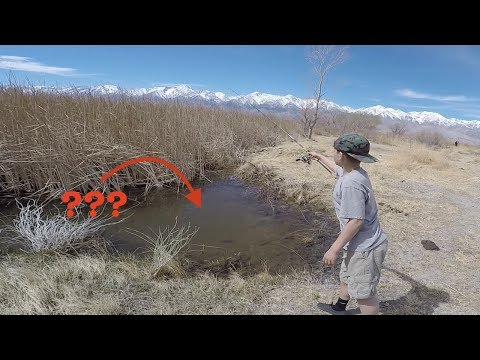 Unlikely Honey Holes with Fish! Fishing Tiny Ponds and Canals Loaded with Fish in Cali (1 of 2)