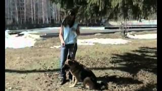 видео Лакомства для собак «Мнямс»