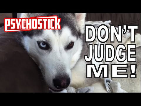 Psychostick - Dogs Like Socks [official music video]
