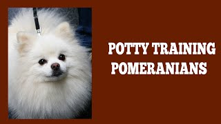 How To Quickly Potty Train Pomeranians