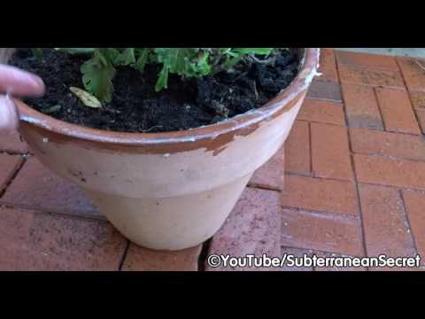 How To Stop Garden Slugs From Eating Plants In Your Plant Pots Youtube
