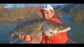 Mequinenza 2015, Fischen am Ebro, März - April 2015, Rio Ebro 2015, Zandertraum