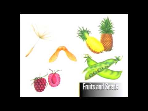 Monocot And Dicot Seeds Youtube