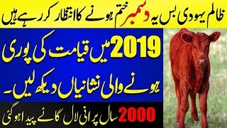 Most Amazing Predictions For 2019 By Historical Point Of View | Islamic Solution