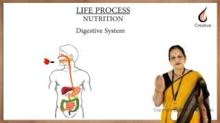 CBSE class 10 Biology -  Nutrition