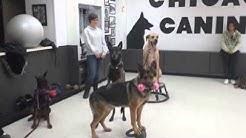 Best Dog Trainer | Chicago, IL – Chicago Canine Academy
