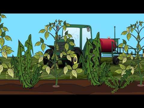 GMO Soybeans & Sustainability