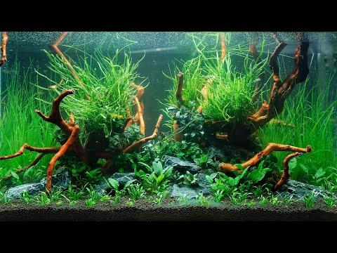 VLOG -  Four Professional Aquascapes at Planted Aquarium Show