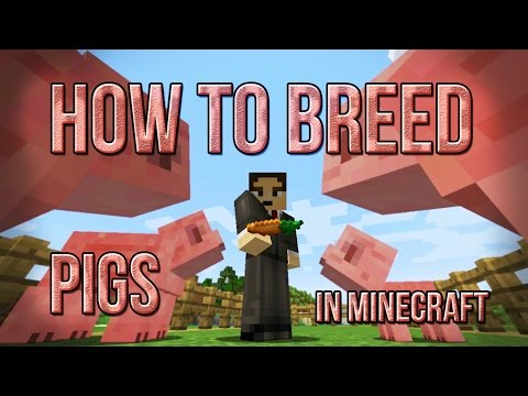 How To Breed Pigs In Minecraft