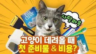 고양이 데려올 때 필요한 첫 준비물 리스트 & 비용 계산!   김메주와고양이들