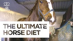 The Ultimate Horse Diet | Health & Fitness