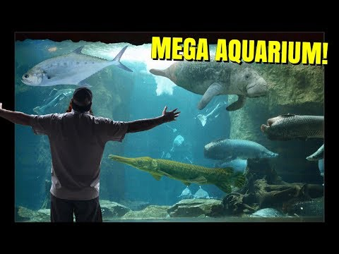 The NEWS did NOT LIE, about THIS GIANT INDOOR AQUARIUM!