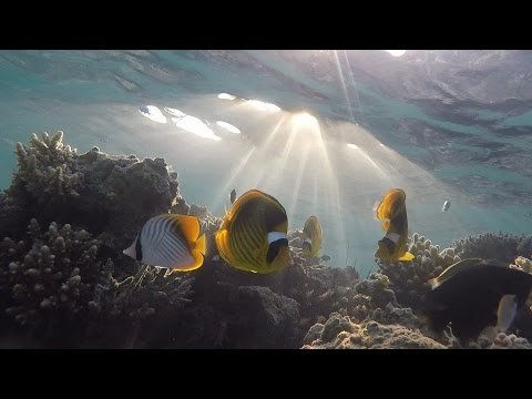 Отпуск в Египте. Удивительный подводный мир Красного моря. Хургада Тест камеры GoPro HERO4 HD 2