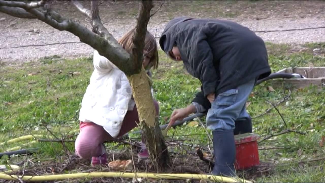 Le badigeon d 39 argile pour prot ger les arbres fruitiers youtube - Comment proteger les arbres fruitiers du gel ...