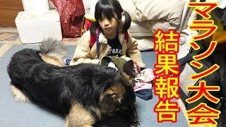 grandchild and #GermanShepherd dog#AkitaInu #ジャーマンシェパード犬...