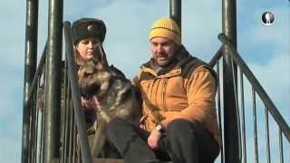 Планета собак. Восточноевропейская овчарка