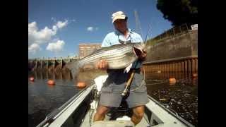 stripers on the redington 7 wt fly rod