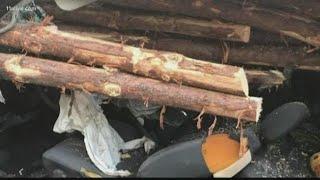 Georgia driver survives harrowing crash as huge logs pierce car
