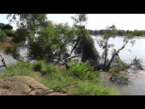 Hippo & Crocs at Crook's Corner.flv