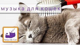 Музыка для кошек боится фейерверков использовать эту музыку Bonfire Night(Релакс музыка My Cat поможет успокоить и успокоить вашу кошку или котенка в различных ситуациях. Минимизация..., 2013-11-13T19:00:00.000Z)