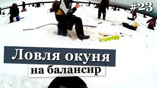 Ловля крупного окуня на балансир в толпе. Рыбалка зимой по первому льду. Зимняя рыбалка Свирь 2016.