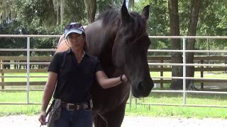 Join up with Horses: What does it Mean in Horse Training