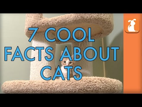 7 Cool Facts About Cats