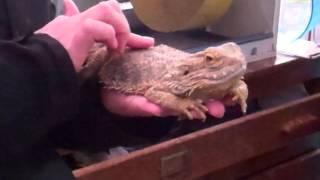 Will's Wild Animal Encounters at Hoo Farm - 1/11/2015 57