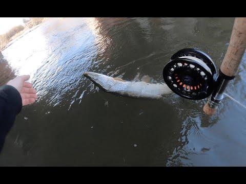 Fly Fishing Urban Canal Pike