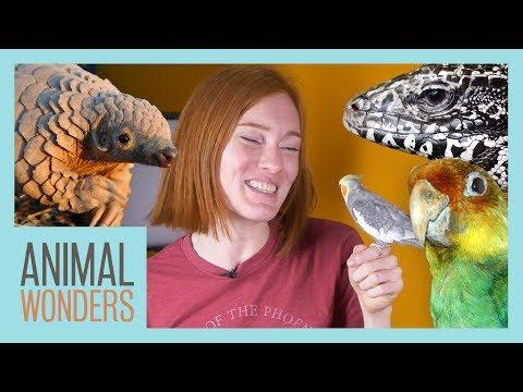 Ask Jessi 13 - Pangolins & Parakeets