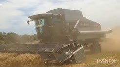 The Beginning of 2019 Wheat Harvest with a Gleaner