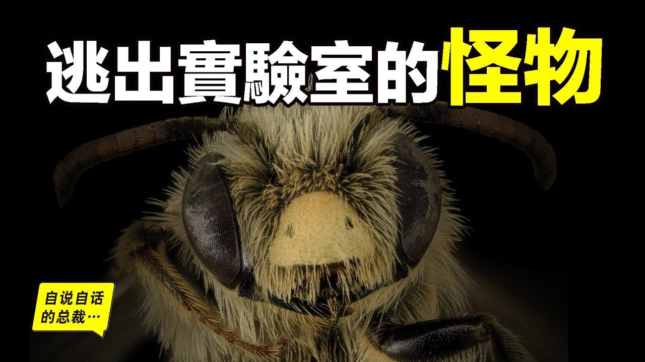人造怪物:63年前,27只殺人蜂逃出實驗室,現在它們擁有15億只殺人蜂大軍……|自說自話的總裁