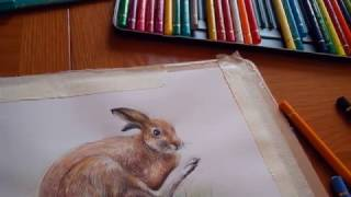 Marker and colour pencil drawings of animals