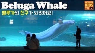 흰고래 벨루가 다시 만났어요. 롯데월드 아쿠아리움 수족관 beluga whale l aquarium l shark attack l 상어 l shark l 수족관 l 아쿠아리움