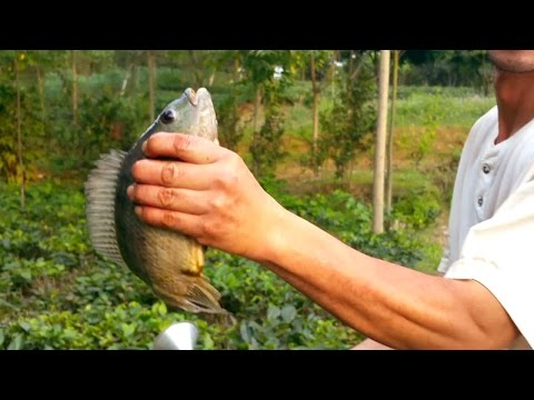VN Daily - Amazing Fishing Hook, How To Fishing With Khmer Fish Hook, Vietnam Traditional Fishing