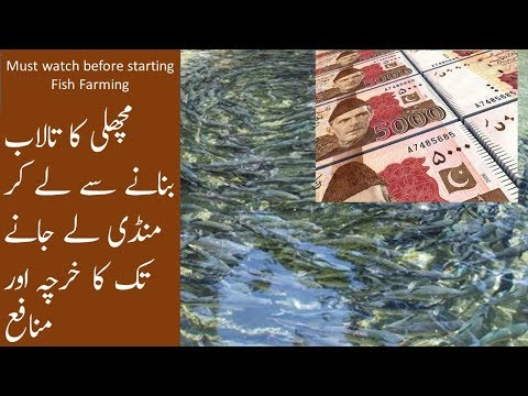 How much Profit can you make in Fish Farming Business? Fish farming cost estimation Urdu/hindi