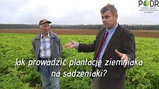 Video Jak prowadzić plantację ziemniaka na sadzeniaki? download MP3, 3GP, MP4, WEBM, AVI, FLV November 2017