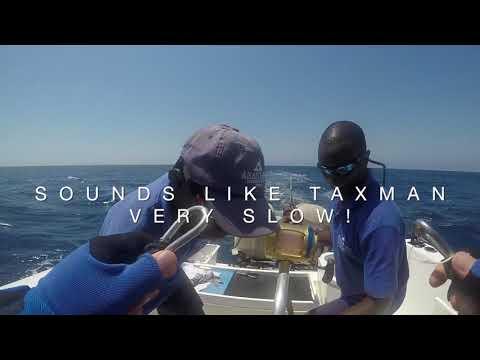 Black Marlin Bazaruto 3 Big Fish 1000lbs Tag And Released