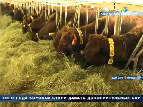 Сельское хозяйство для Якутии, является жизненно важной отраслью