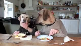 Dwa psy jedzące obiad.Niesamowita Iluzja!    Zjajcowani 2013