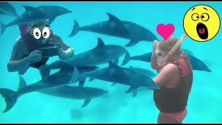 SWIMMING WITH WILD DOLPHINS IN THE SEA PLUS VALLEY OF THE KINGS EGYPT 2018