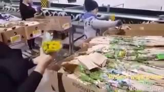 Работа в Польше. Оформление букетов (работа с живыми цветами)