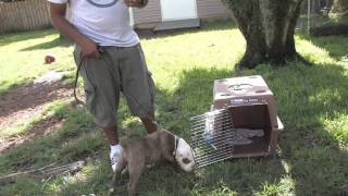 Dog Training : How To Crate Train A Puppy