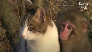 Can A Cat And A Monkey Be Friends? Or Fall In Love? | Kritter Klub